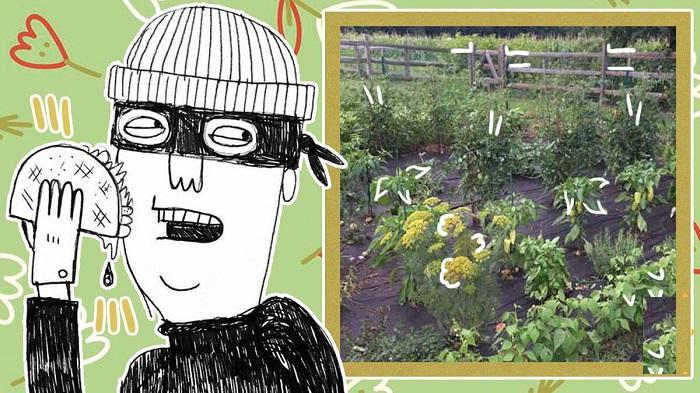 У садовника стали пропадать овощи, и он установил камеру