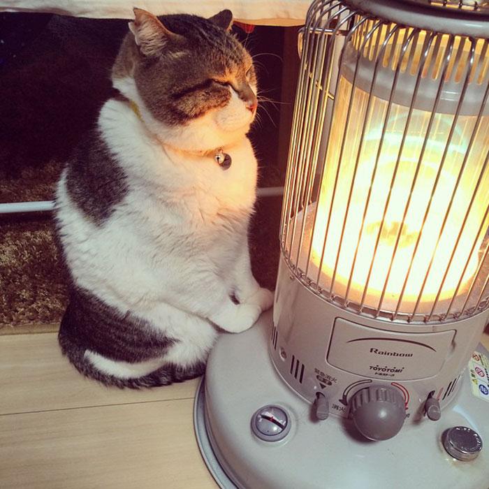 Японский кот покорил соцсети своей любовью к домашнему обогревателю: фото