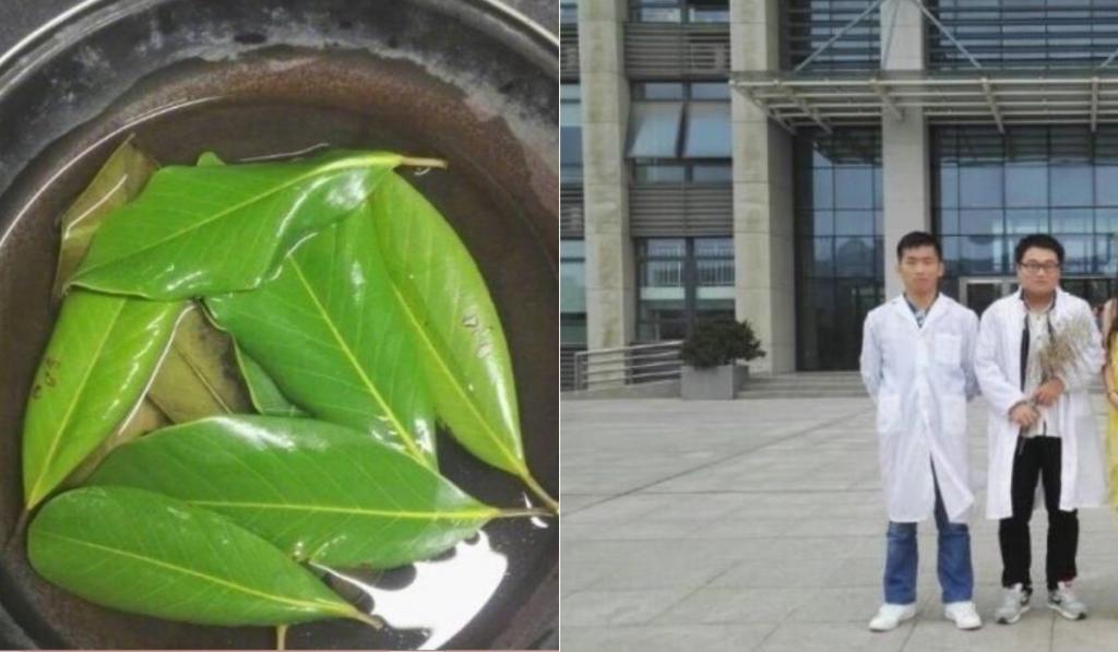 За полгода студенты собрали 6000 листьев и сделали из них оригинальное платье (фото)