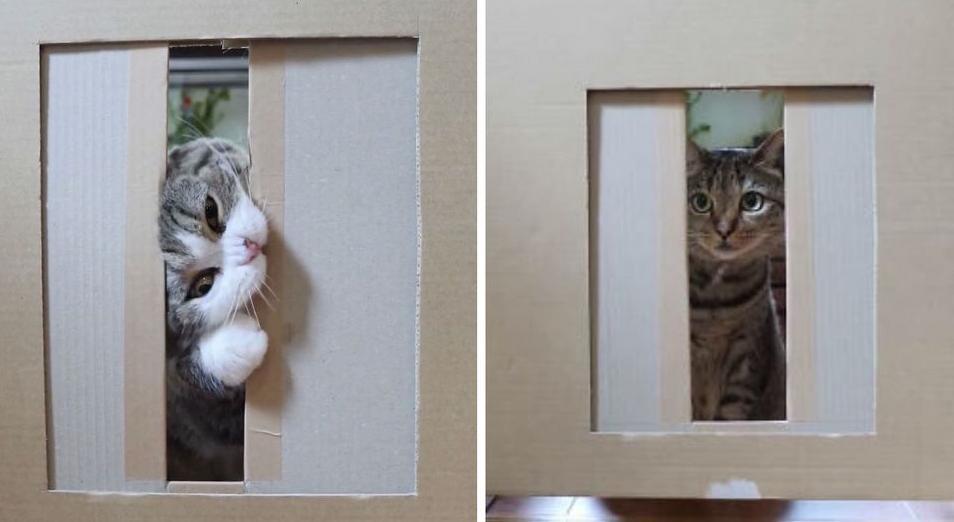 Интересный эксперимент: мужчина решил проверить, насколько узкой должна быть щель, чтобы в нее не смогла протиснуться кошка