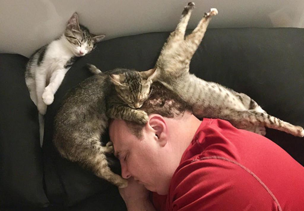 Мужчина заснул с тремя кошками на голове   10 фото людей, которые заснули в неподходящий момент