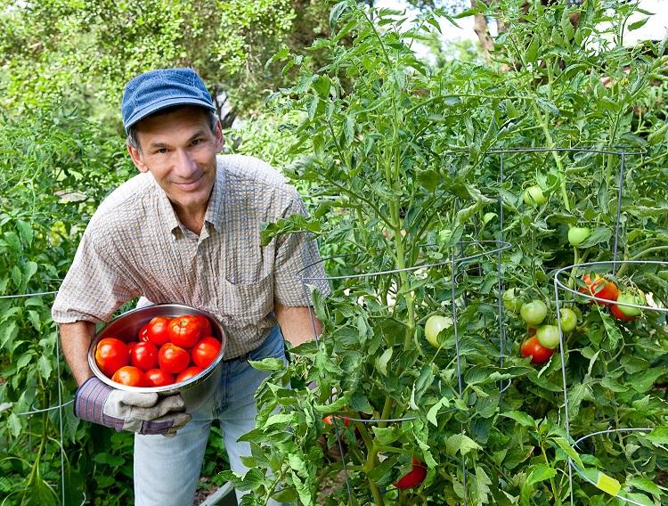 Омолодить разум, тело и душу, улучшить психическое здоровье и не только: ученые объяснили, почему важно заниматься садом и огородом