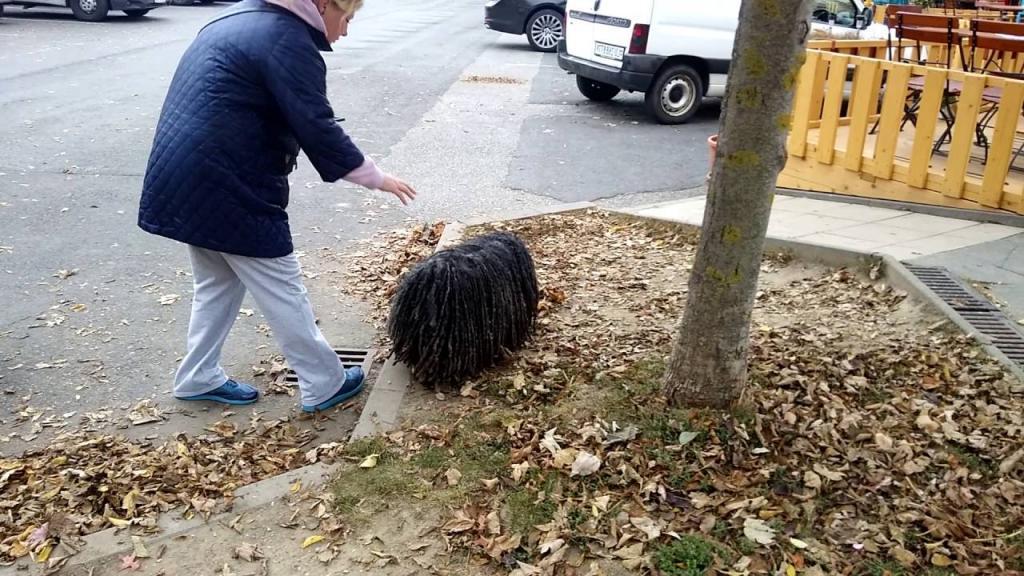 Вернувшись с прогулки, хозяйка обнаружила в шерсти собаки необычного гостя, маленький зверек не хотел убегать на волю