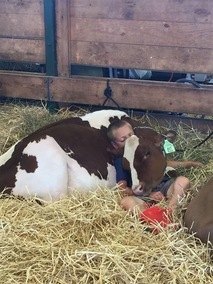 Некоторые люди могут уснуть где угодно и как угодно, даже на корове и под столом (фото)