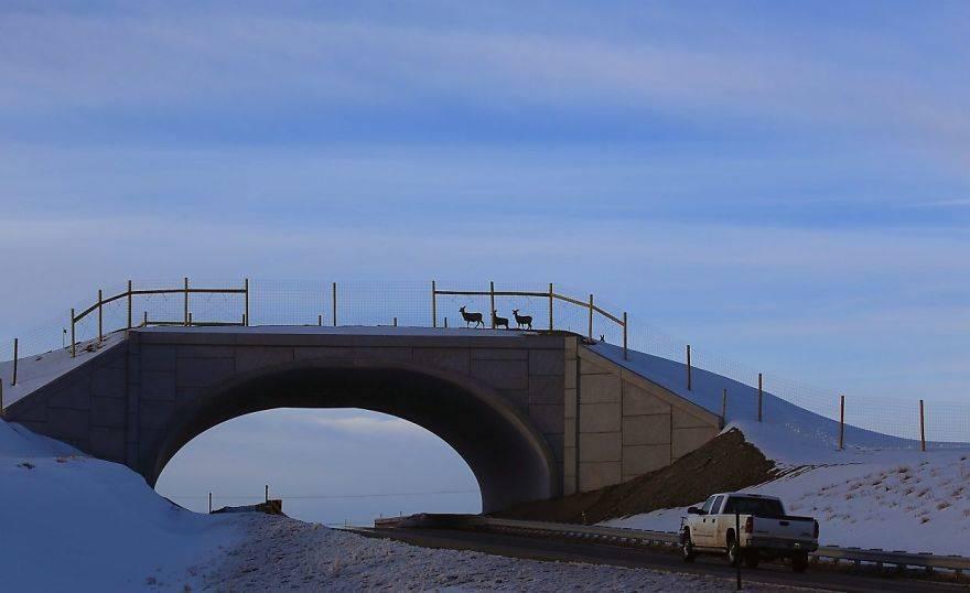 25 мостов, которые защищают животных от людей и их машин