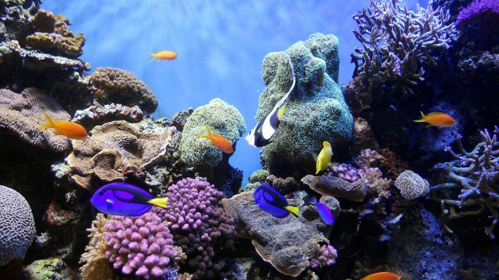 TikTok пожертвует 2 доллара на сохранение океана за каждое видео, загруженное с хэштегом #SaveOurOceans