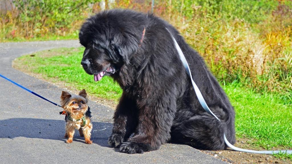 Собака   друг и целитель. Ученые доказали, что эти животные продлевают жизнь своих хозяев на 2 года