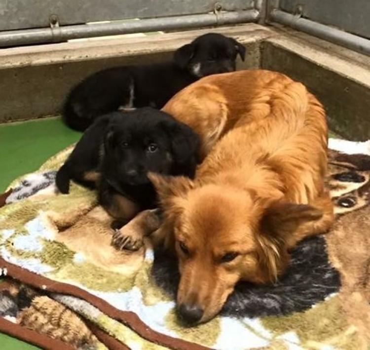 Мама собака пришла ночью на помощь двум приемным щенкам. Камера запечатлела то, как она их успокоила и обогрела