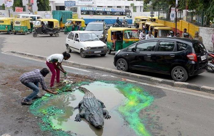 Парень хочет привлечь внимание властей к плохим дорогам и выбирает для этого творческий способ: на крокодила в луже сложно не обратить внимание