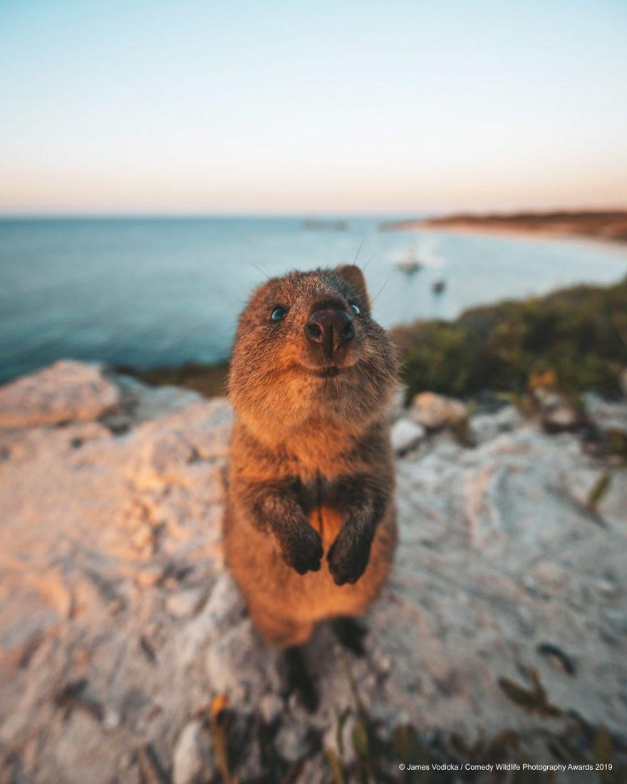 39 самых смешных фотографий дикой природы за 2019 год