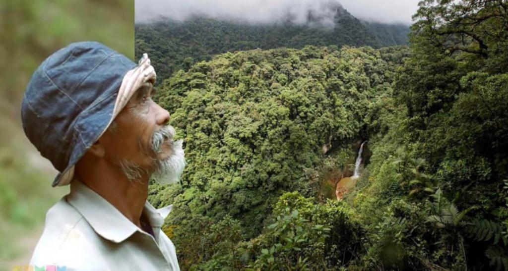 Ради сохранения экосистемы на острове Ява, мужчина в одиночку посадил 11 000 деревьев