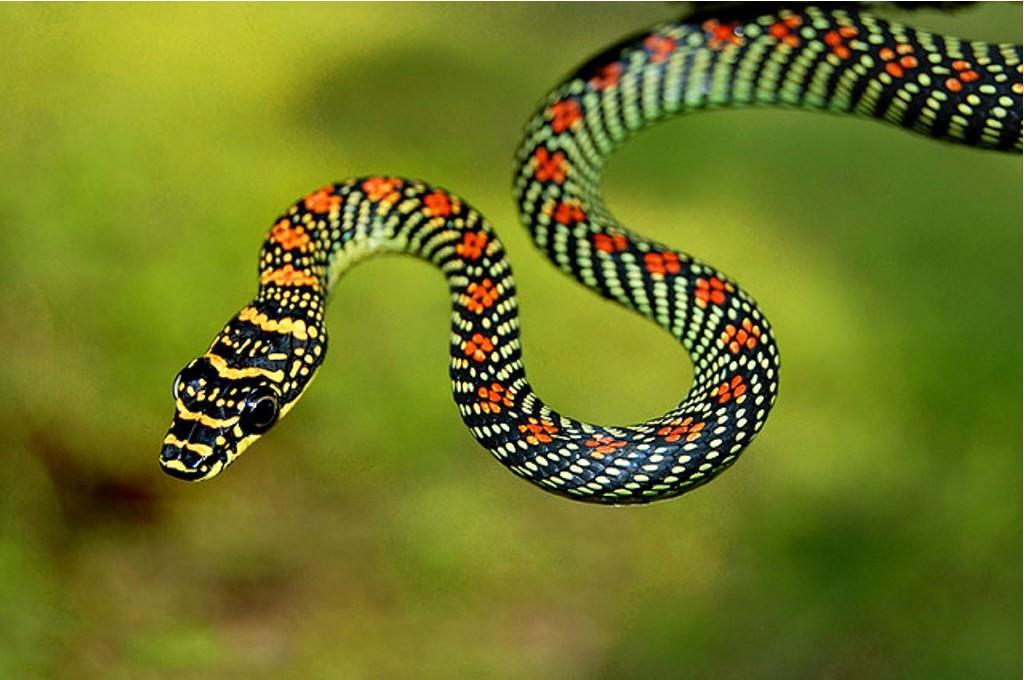 Это важно знать каждому: что можно и чего категорически нельзя делать при укусе змеи