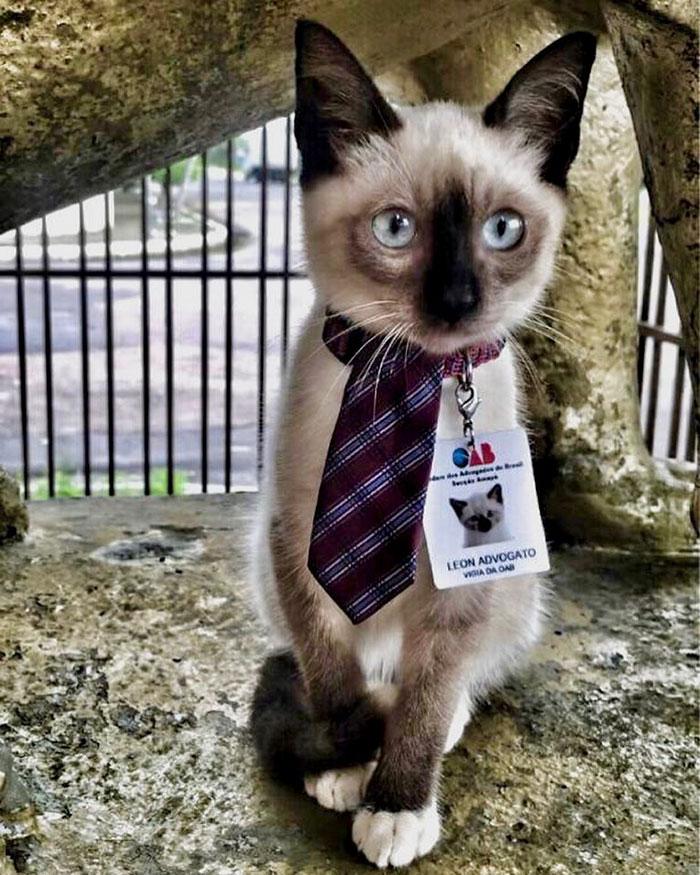 Клиенты жаловались на бродячего кота в офисе юридической фирмы. Руководство нашло решение