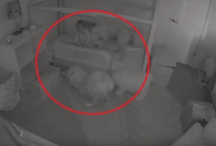 Родители не понимали, почему их дочка ходит по ночам. Установив камеру в спальне, они поняли: малышку будят четырехлапые