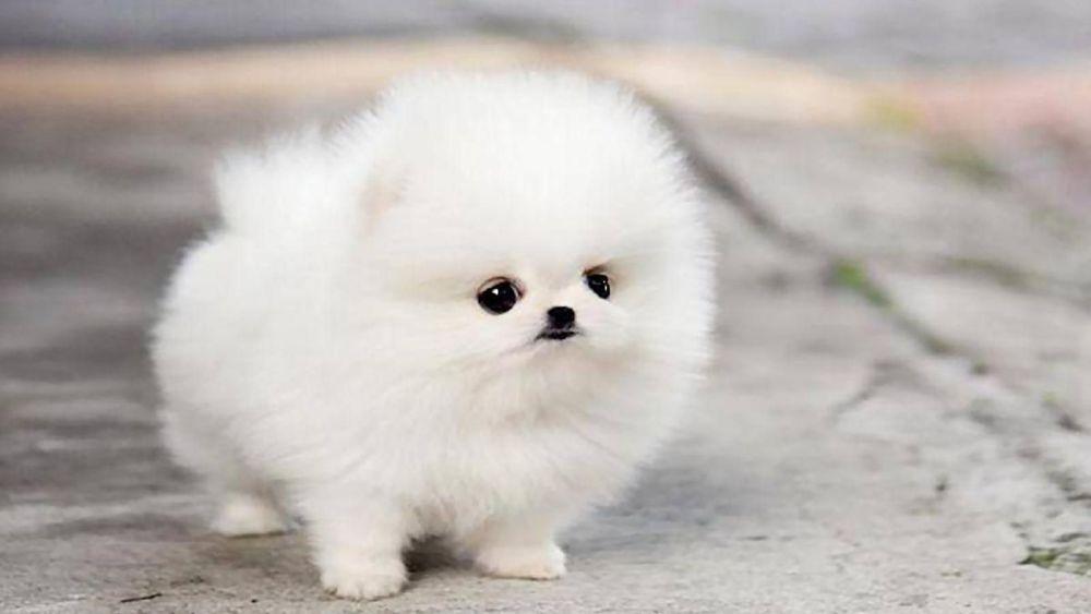 Жительница Китая купила породистого щенка, но его стали бояться сородичи. Оказалось, это не собака