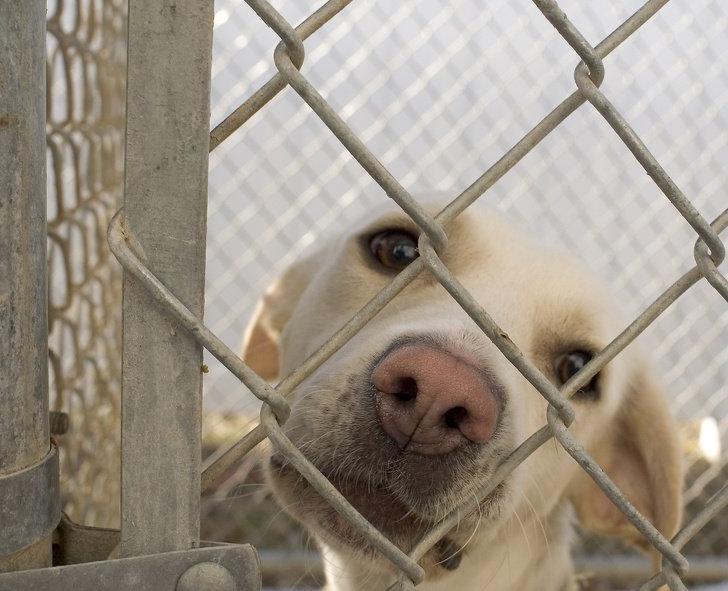 Он уже привит, не будет сюрпризов с размером: преимущества воспитания уже взрослой собаки
