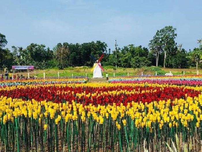 Голландия? Нет, это один из городов на Филиппинах превратил пластиковые отходы в настоящий цветник
