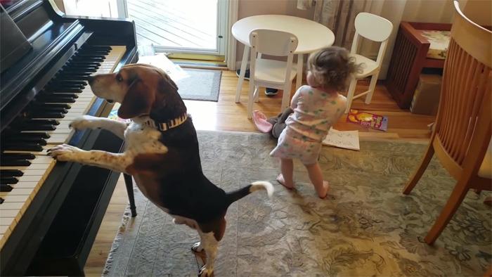 Мужик снял на видео, как его дочь танцует под музыку, которую на пианино играет собака