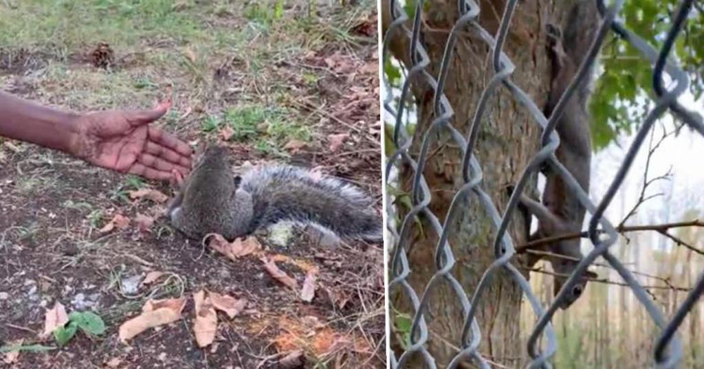 Женщина гуляла в парке, как вдруг путь ей перегородила белка: оказалось, животное просило помощи
