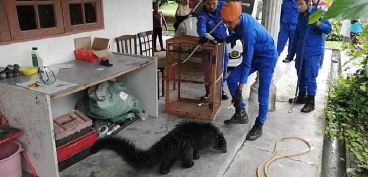 Одни люди подумали, что в их деревню забрел медведь, а другие сказали, что это кот: ошибались все
