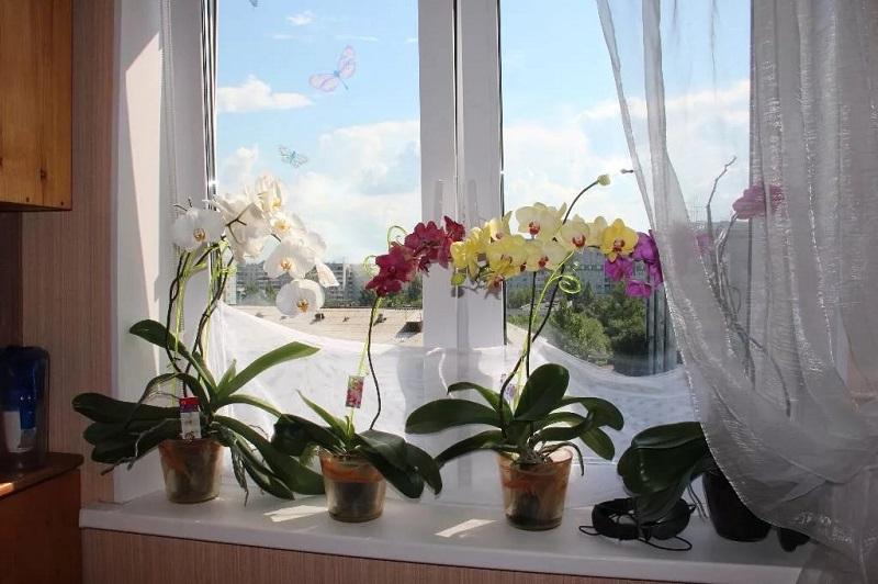 Моя подруга цветовод рассказала, стоит ли выращивать орхидею дома. Оказывается, цвет растения имеет значение
