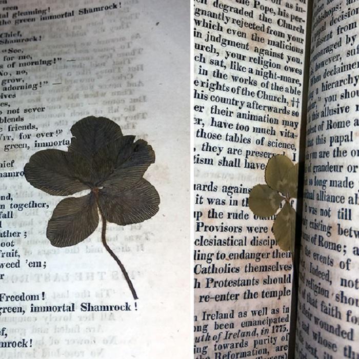 Сюрпризы от прежних владельцев: интересные вещи, которые люди находили между страницами старых книг