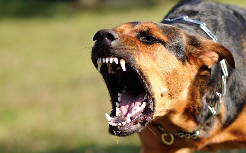 картинки собаки кусаются доме