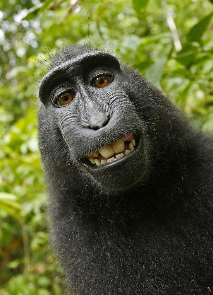 Картинка на аватарку прикольные животные