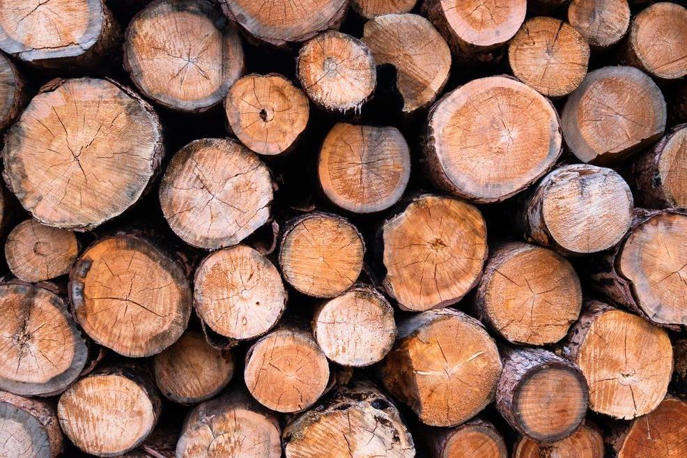Кора деревьев и вирусы - 10 неожиданных ингредиентов и добавок в продукты, о которых мы не знали