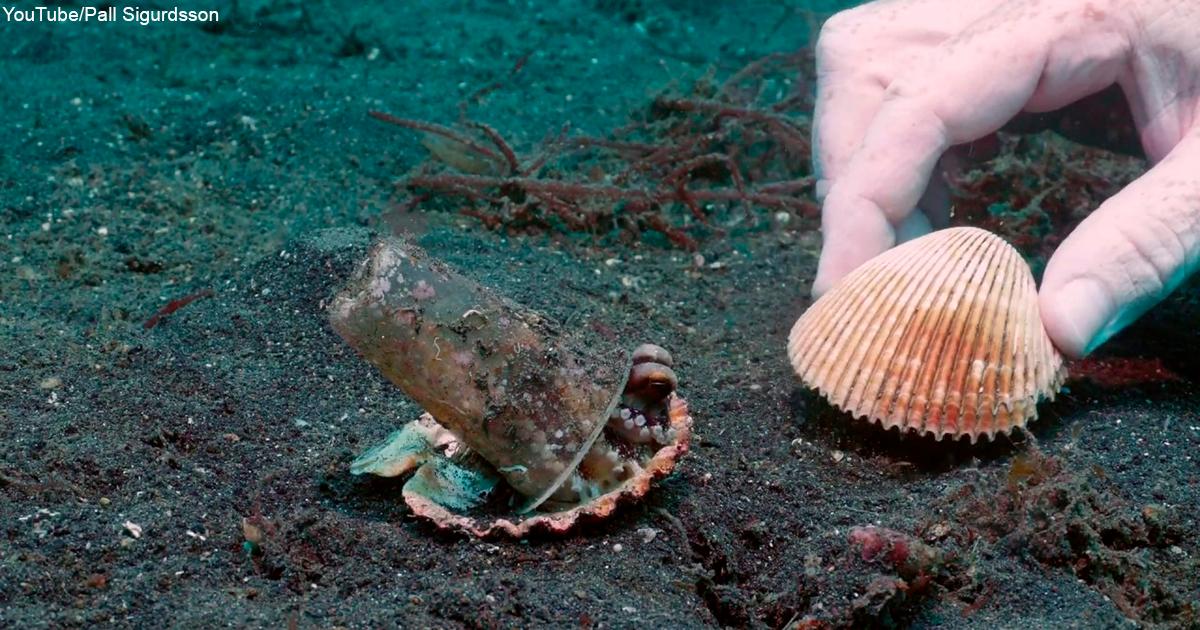 Дайвер убедил осьминога отказаться от пластикового стакана в обмен на раковину