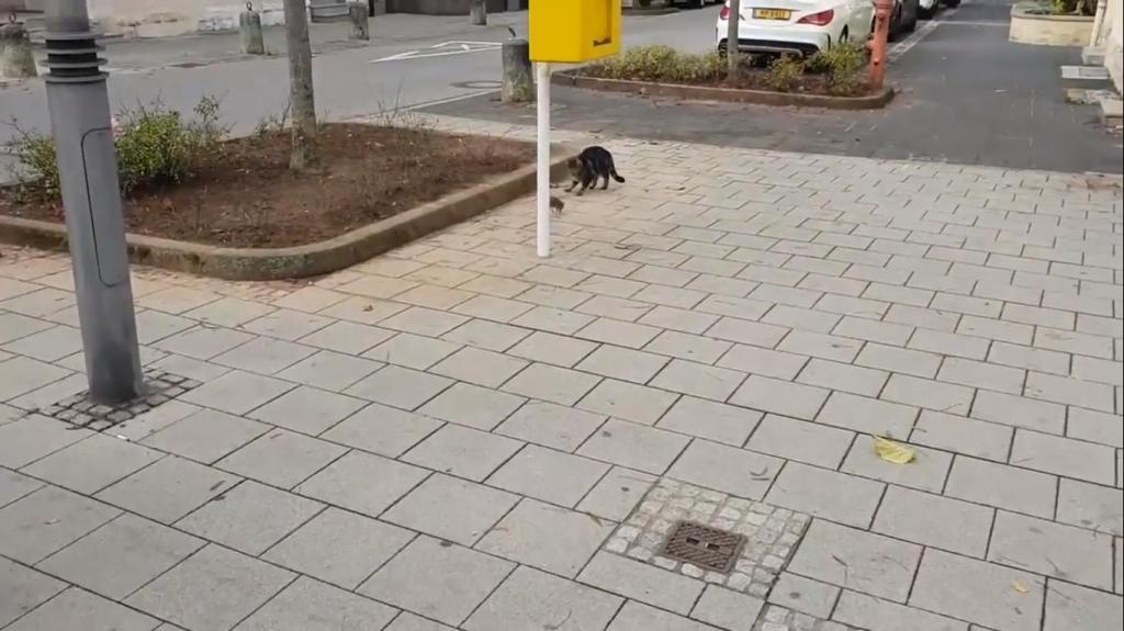 Кот увидел крысу на улице и побежал за ней. Но крыса оказалась не из робкого десятка (видео)
