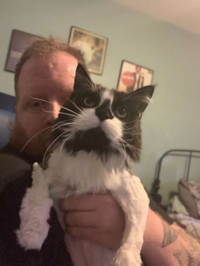 Семья переехала и обнаружила в подвале лохматое чудище. Это была кошка, которая нуждалась в стрижке