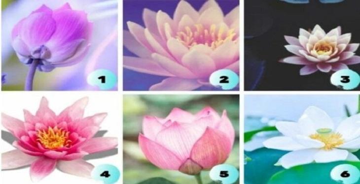 Что делать - подскажет лотос: выбираем 1 из 6 картинок, и она расскажет, что предпринять в текущей ситуации