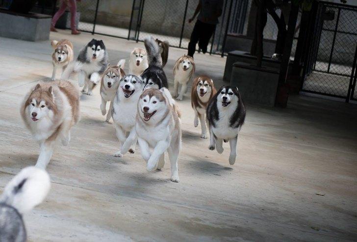 В Таиланде открылось кафе, где посетители могут провести время с лайками и собаками других пород, пока ждут свой заказ