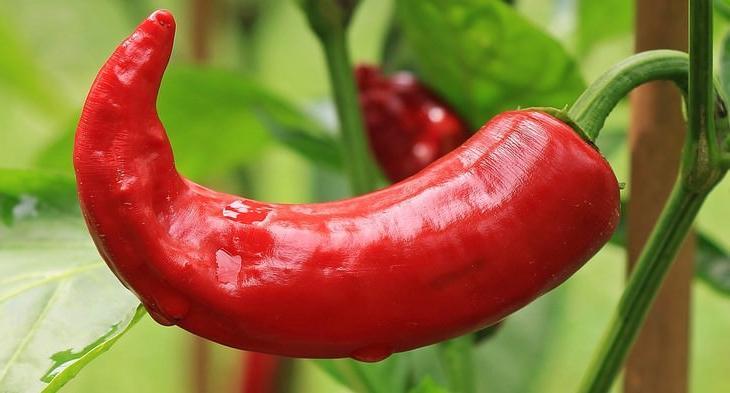 С заботой о венах и артериях: 10 вкусных продуктов, которые помогут улучшить кровообращение
