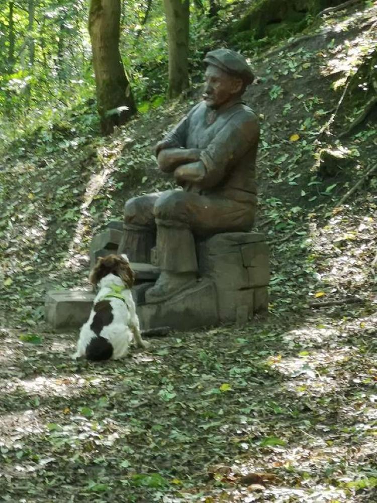 Собака не может понять, почему сидящий мужчина не хочет с ней играть. Курьезный случай во время прогулки