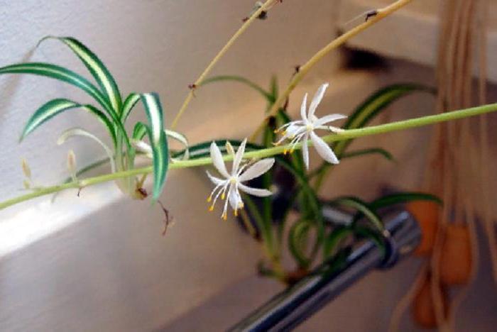 Идеально подходят для ванной и темных помещений: 10 комнатных растений, которые почти не нуждаются в солнечном свете