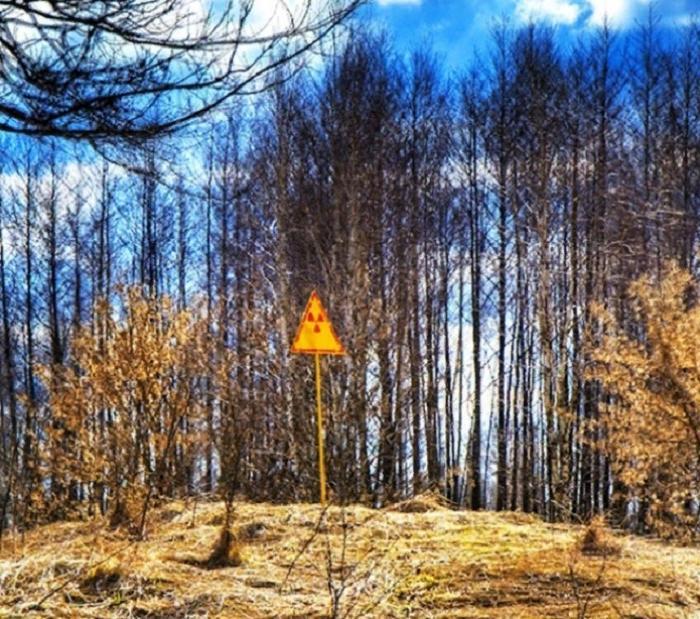 Леса, которые вселяют страх даже при дневном свете: тиковый лес, треугольник Беннингтона и другие
