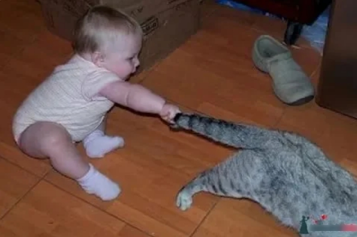Кот послушался нашу бабушку, что маленького внука трогать нельзя, что многое терпел