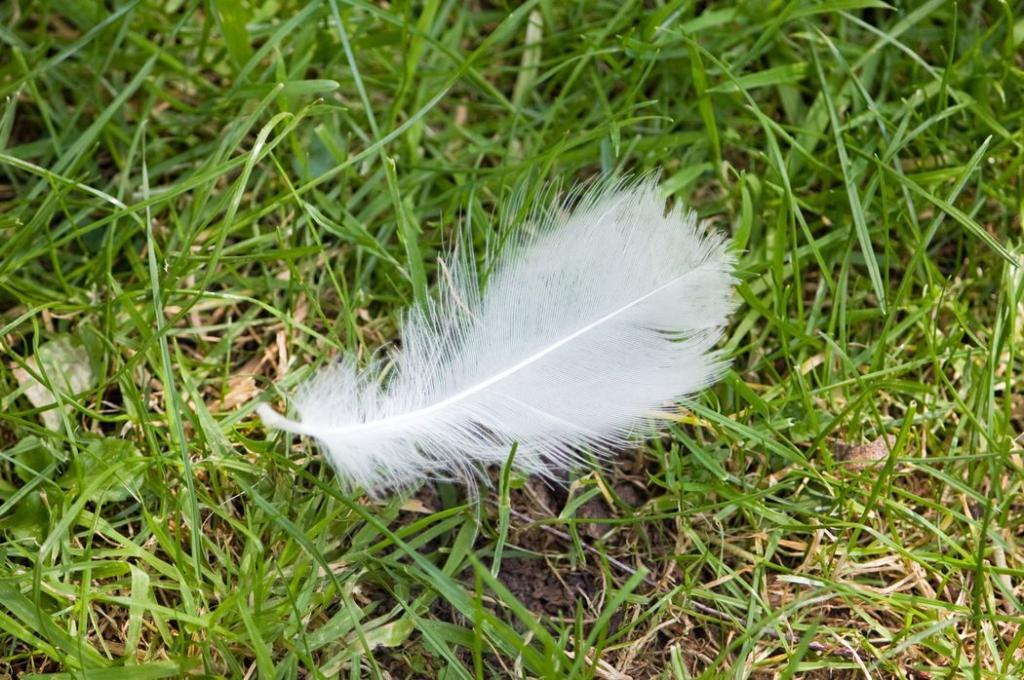 Перышки на земле и облака в небе: 12 признаков того, что наш ангел-хранитель рядом и защищает нас