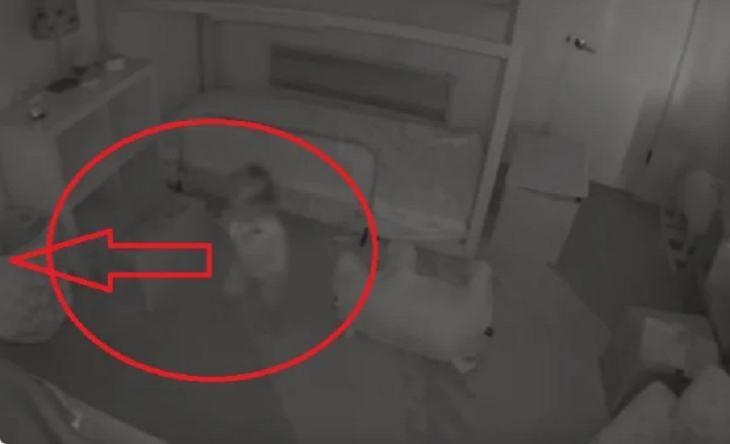 Родители не понимали, почему их дочка ходит по ночам. Установив камеру в спальне, они поняли: малышку будят четырехлапые  хулиганы