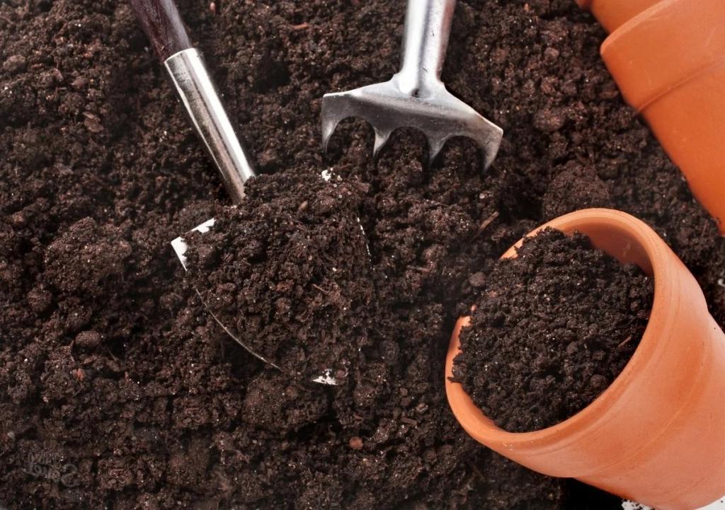 Ни один не замерзнет: что сделать осенью, чтобы уличные цветы успешно перезимовали   советы опытного садовода