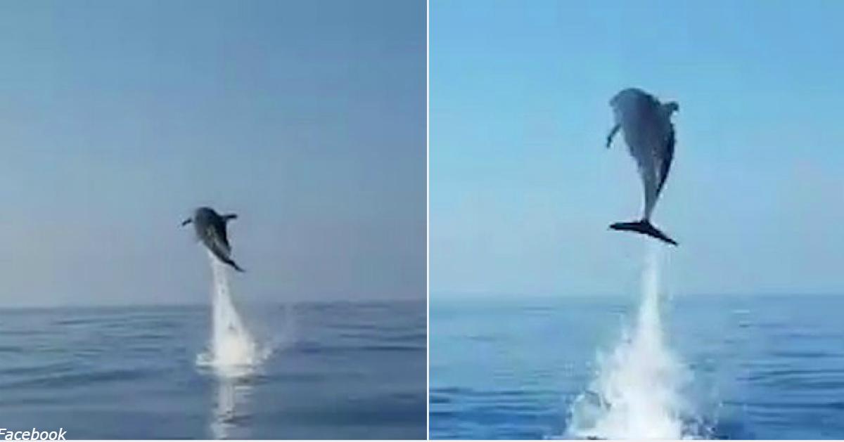 Рыбаки выпустили маленького дельфина из сети. Вот как их поблагодарила его мать
