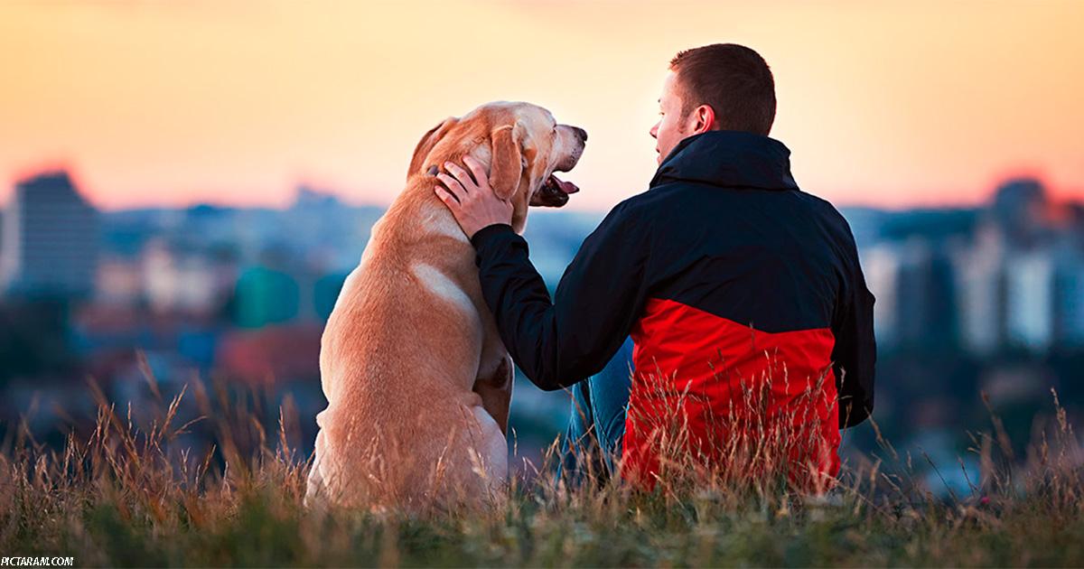 Потерять собаку может быть тяжелее, чем потерять друга. Исследование