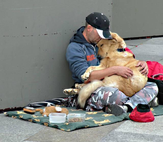 Собака — то животное, кто будет предан до последнего…