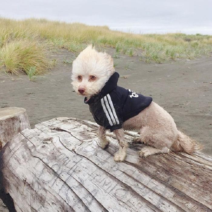 В Сети нашли забавного пса с