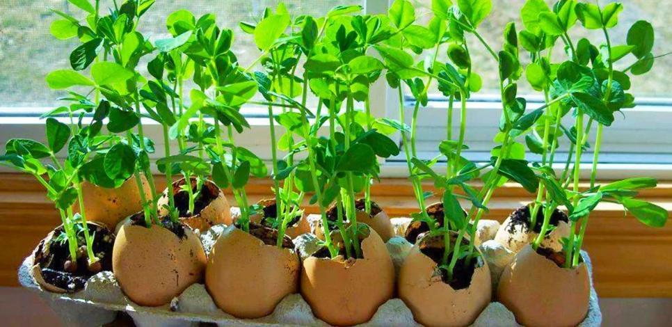 Почему не стоит выкидывать яичную скорлупу: полезное и творческое применение в хозяйстве