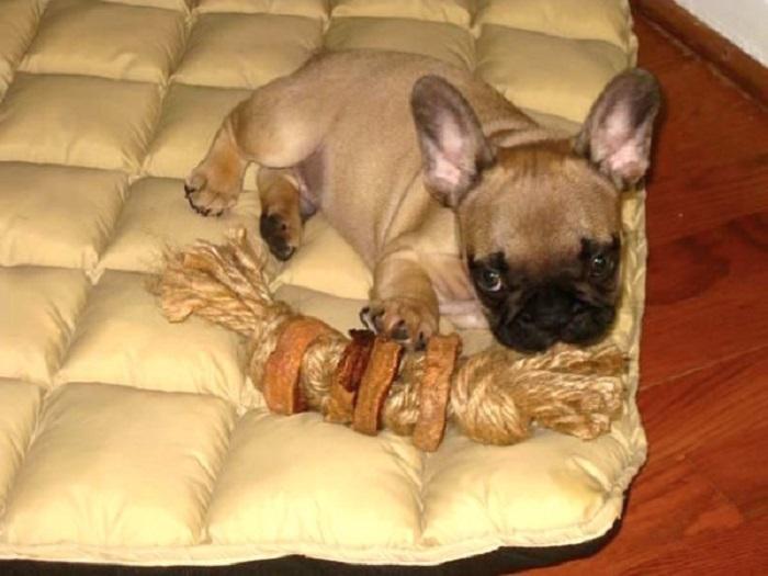 Сделал для своей собаки игрушку из сладкого картофеля. Питомец теперь не выпускает ее из зубов: инструкция