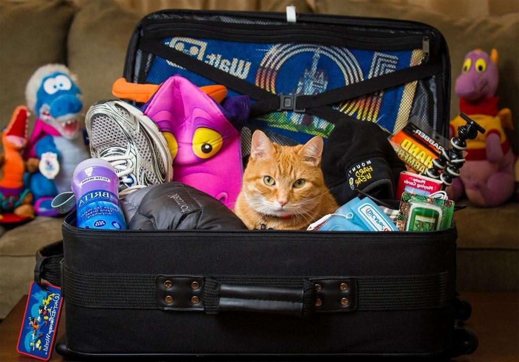 Хотите путешествовать налегке? 12 вещей, к которым вы не прикоснетесь и зря будете таскать за собой всю поездку