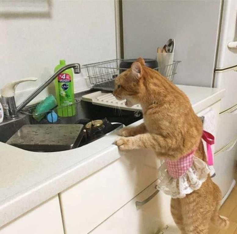 Сама бы не справилась: котенок помогает хозяйке